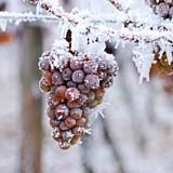 I is for Ice Wine