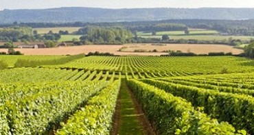 E is for England's green and pleasant (wine) land